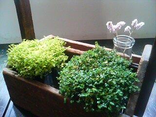 新町のヘアサロン noiの植物